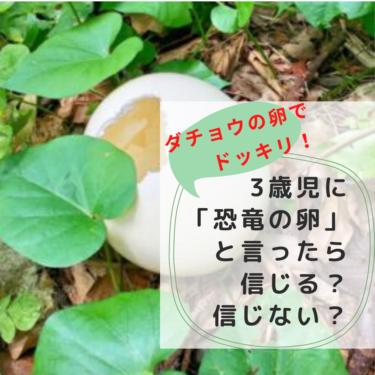 ダチョウの卵でドッキリ!3歳児に「恐竜の卵」と言ったら信じる?信じない?